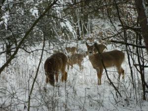 March 2013 Snow-Forest Glen